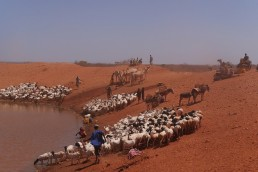 The pastoralists of Ethiopia's Somali region make a living raising cattle, camels and goats in an arid and drought-prone land. They are forced to move constantly in search of pasture and watering holes for their animals. Ahead of COP 24, African experts have identified the need to speak with one unified voice, saying a shift in the geopolitical landscape threatens climate negotiations. Credit: William Lloyd-George/IPS