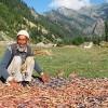 Abdul Razzak with a harvest of prized Kashmiri beans in the fertile Gurez valley. Credit: Athar Parvaiz/IPS