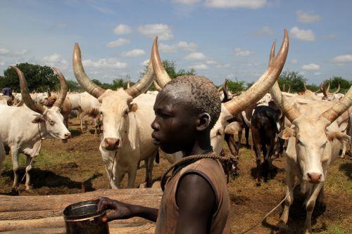 A member of the Mundari tribe stands amongst cattle in Terekeka, South Sudan. Credit: Jared Ferrie/IPS