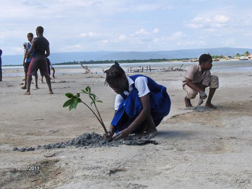 School children in Jamaica plant mangrove seedlings on Dec. 2, 2011 to fortify coastal areas from the effects of climate change.  Credit: Courtesy of the Caribbean Coastal Area Management Foundation