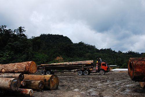 Unabated logging in Malaysia's Sarawak state. Credit: Raymond Abin/IPS