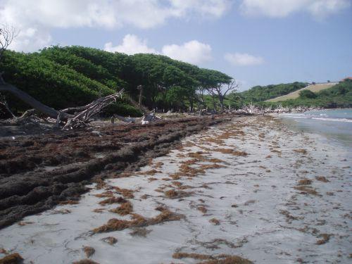 Coastal erosion in Carriacou, Grenada. Credit: Peter Richards/IPS