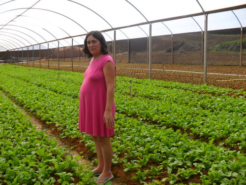 Rosana Nogueira surrounded by lettuce in her greenhouse.  Credit: Fabíola Ortiz/IPS