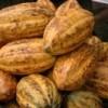 Cocoa pods. Credit:  Francis Kokutse/IPS