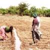 Irrigation has greatly increased food production by farmers like Masuzgo Jere. Credit:  Pilirani Semu-Banda/IPS