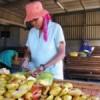 Annemarie Konstabel prepares pears at Welgemeen. Credit:  Stephanie Nieuwoudt/IPS