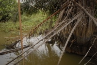 The river at Mtwepe. Credit:  Jessie Boylan/IPS