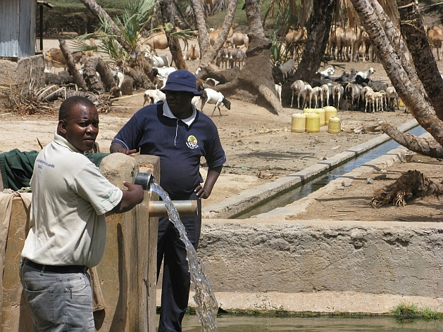 Residents of Kalacha proposed that water from a rare fresh-water desert spring be used to irrigate indigenous grass, which could be used as fodder. Credit: Isaiah Esipisu/IPS