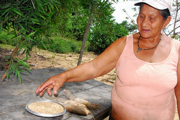 Margarita Amabeja with the rice seed she is about to plant, and this season's first cassava. Credit: Franz Chávez/IPS