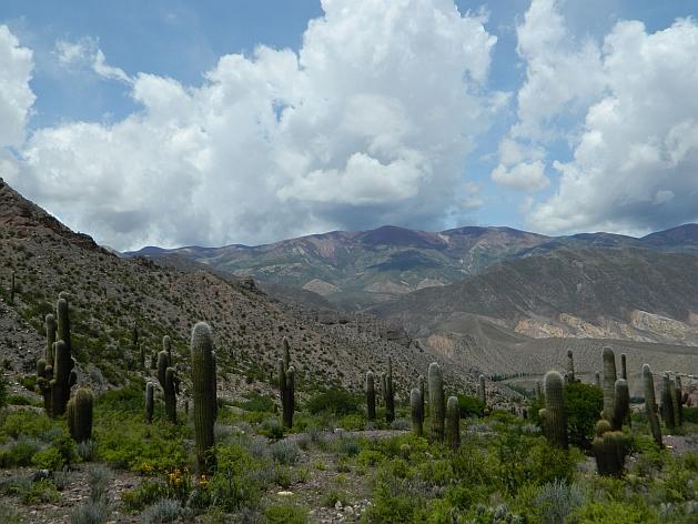 Typical drylands scenery in northwest Argentina, in Tilcara, province of Jujuy. Credit: Juan Moseinco/IPS