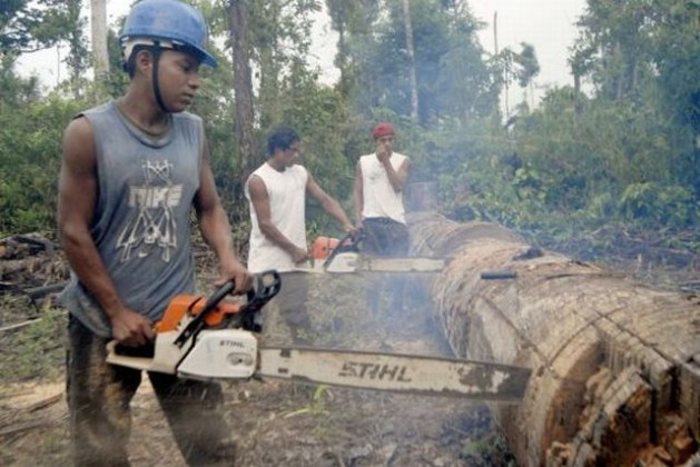 Cutting trees in Nicaragua. Deforestation is inherent to the predatory economy, whether for the exploitation of the timber itself, the soil beneath the trees, or resources in the subsoil. Credit: Germán Miranda/IPS