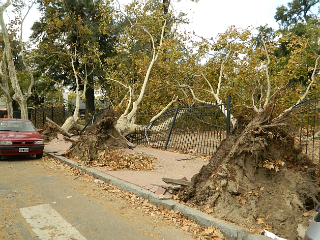 Trees uprooted by the storm in the neighborhood of Barracas, Buenos Aires. Credit: Juan Moseinco/IPS