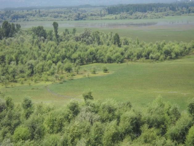 Willow plantations inside the Wular lake have choked its ecology. Credit: Manipadma Jena/IPS