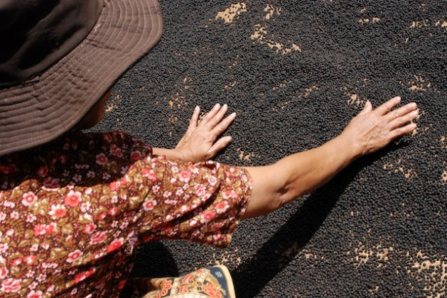 A Cambodian woman dries Kampot peppercorns in the sun. Credit: IPS