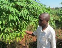 Ugandan-farmer-inspecting-h