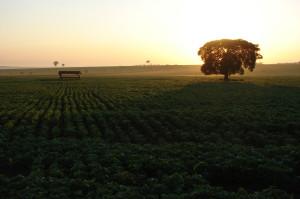 Soybean field near Eldorado in Mato Grosso do Sul, Brazil. Credit: Gerson Sobreira/IPS