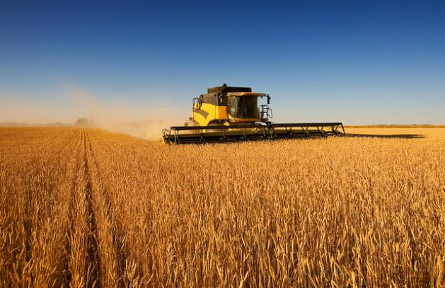 corn field in brazil and argentina