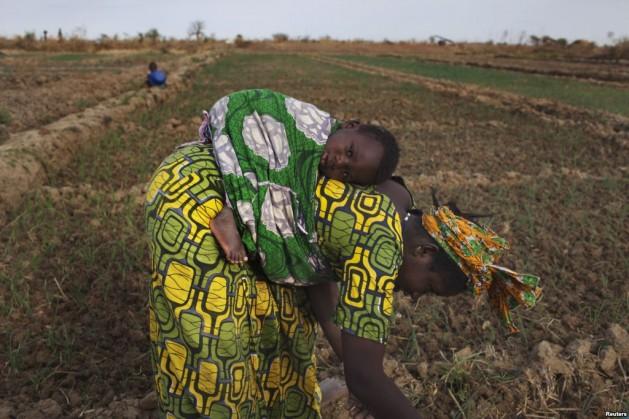 Sabina Shey Nkabiy tills land cleared of eucalyptus trees / Stephen Ndzerem