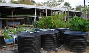 Erle Rahaman-Noronha's closed-loop aquaponics food system. Credit: Mark Olalde/IPS