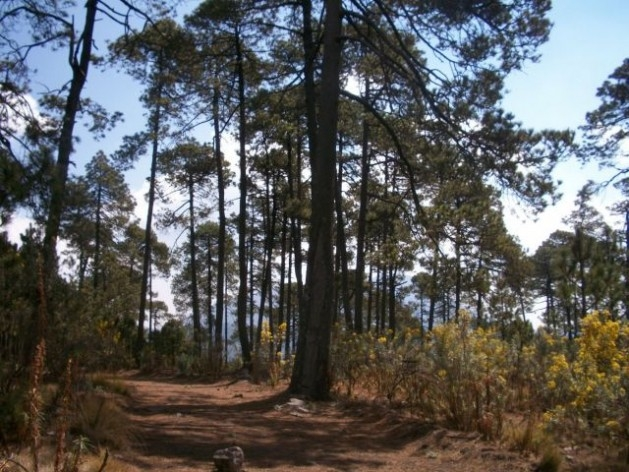 The Ajusco forest, one of Mexico City's green lungs and water sources. Credit: Emilio Godoy/IPS