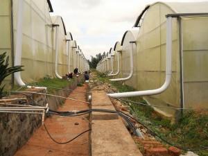 Rose growers in Bangalore, India, rely on sustainable rainwater harvesting techniques. Credit: Keya Acharya/IPS