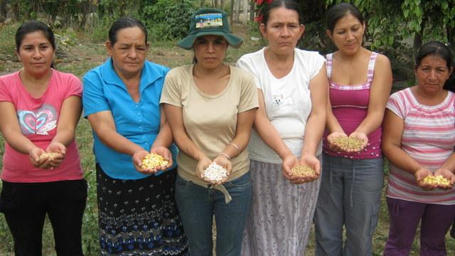 Farmers in the northern Peruvian department of Piura show native sedes they preserve. Credit: Sabina Córdova/IPS