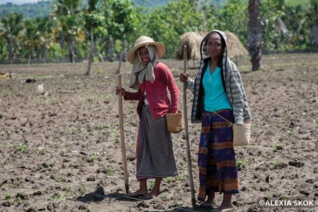 Women in rural Timor-Leste work hard but still fall behind. Credit: © Alexia Skok.