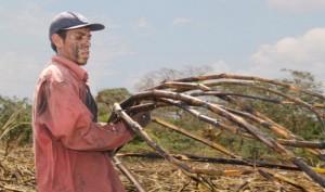 Cane cutter Evaristo Pérez, 22, on the La Isla plantation in the [...] <a class=