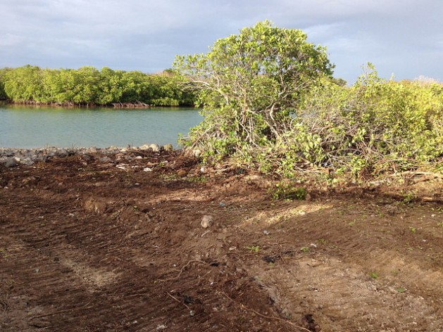 Mangroves being cleared on Antigua's Guiana Island to make way for the construction of a road. Credit: Desmond Brown/IPS