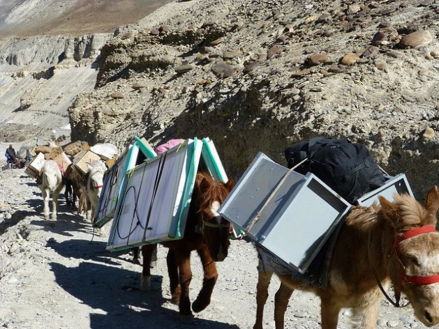 Mules carry a solar energy system to a remote region in the Himalayan desert region of Ladakh. Credit: Athar Parvaiz/IPS