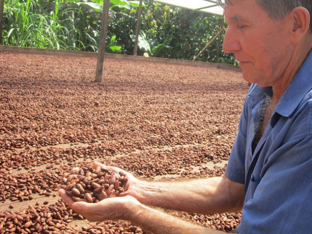 Darcicio Wronski displays the cacao seeds drying in the sun in his yard. His family is one of 120 grouped in six cooperatives that produce organic cacao near Medicilândia and Altamira in the Amazon rainforest state of Pará, in northern Brazil. Credit: Mario Osava/IPS