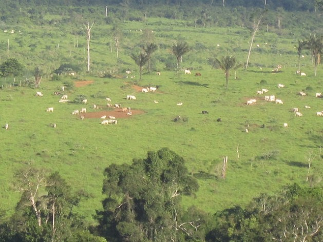 Grasslands replaced the Amazon rainforest in Brasil Novo, a municipality in the Xingú River basin, where the giant Belo Monte hydroelectric dam is being built. Low-productivity stock-raising, with just one or two animals per hectare, is the big factor in deforestation and soil degradation in the region, and the government's goal is to recover just one-fourth of the area degraded by this activity. Credit: Mario Osava/IPS