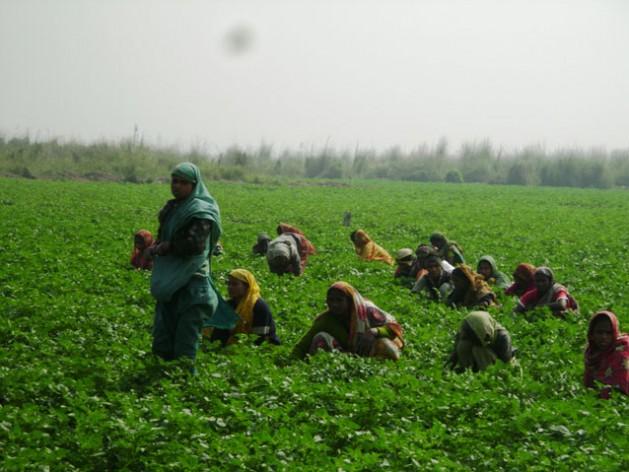 Bangladeshi women farmers prefer climate-proof crops varieties. Credit: Naimul Haq/IPS