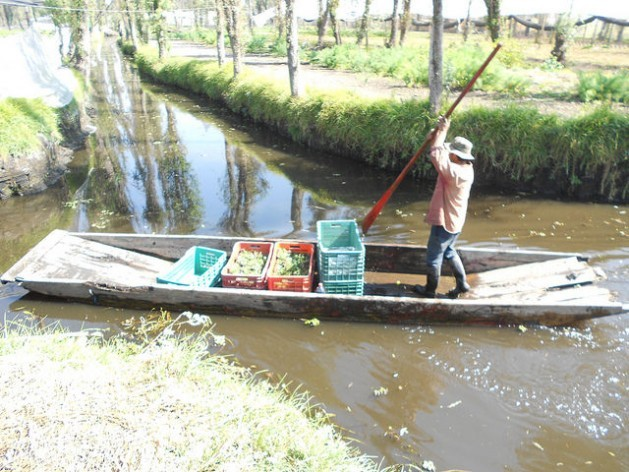 A farmer transports his freshly harvested crops from his chinampa - a rectangular garden on land reclaimed from the wetlands of Mexico City - along a canal in Xochimilco. But this age-old Aztec technique used to feed the local population is threatened by the encroaching city and by pollution. Credit: Emilio Godoy/IPS
