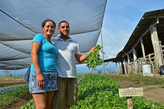 Xinia Solano and Luis Diego Murillo are one of the families working with the shade house programme in Los Reyes, in the southeastern Costa Rican municipality of Coto Brus. This model of agriculture is being promoted by the FAO, in conjunction with various government institutions. Credit: Diego Arguedas Ortiz/IPS