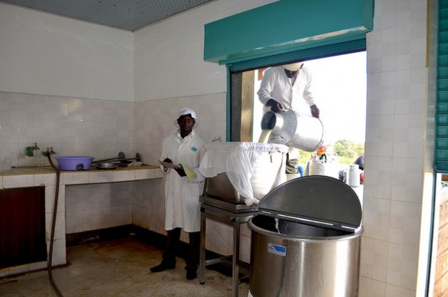 Ng'arua Co-operative Society manager Daniel Mithamo recording the quantity of milk received, as the Brookside technician David Kungu puts the milk into a sieve. Credit: Daniel Sitole/IPS