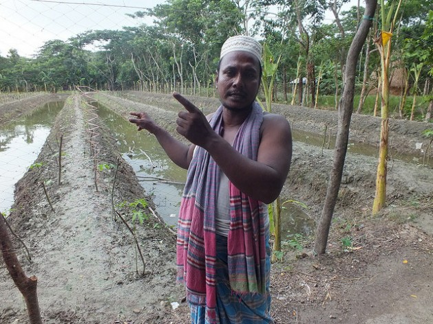 Bangladeshi farmer Aktar Hossain using the Sarjan model. He just planted eggplant (known locally as brinjal) worth 700 dollars and released fish worth 240 dollars. Hossain expects a profit of 1,200 dollars by the end of the season. Credit: Naimul Haq/IPS