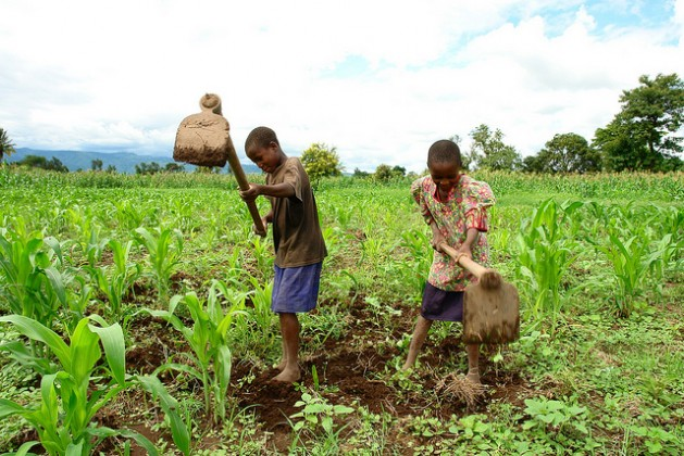 Peter Mcharo's two children digging their father's maize field in Kibaigwa village, Morogoro Region, some 350km from Dar es Salaam. Mcharo has benefitted greatly from conservation agriculture techniques. Credit: Orton Kiishweko/IPS