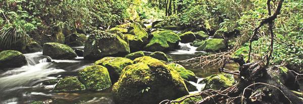 Te Urewara National Park