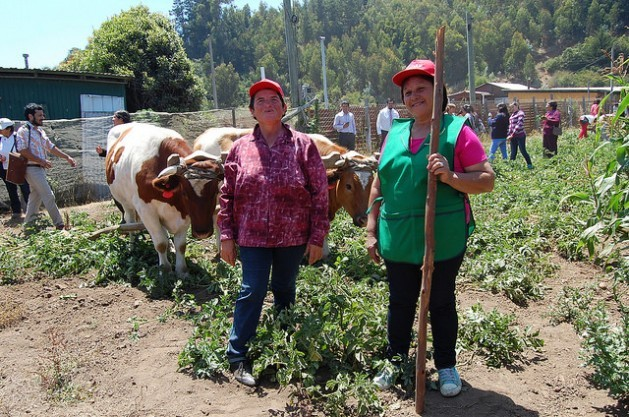 Two farmers in Cobquecura in central Chile show visitors changes made in their subsistence crops to withstand the effects of global warming, with the support of public policies to strengthen food security in times of climate change. Credit: Claudio Riquelme/IPS