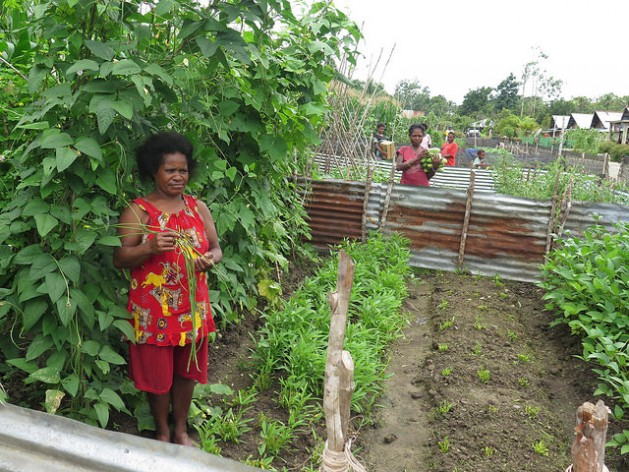 Villages in Papua New Guinea are being transformed with permanent houses and front-yard food gardens. Credit: Kafil Yamin/IPS