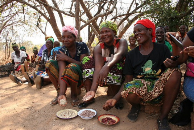 Pulses are good for nutrition and income, particularly for women farmers who look after household food security, like those shown here at a village outside Lusaka, Zambia. Credit: Busani Bafana/IPS