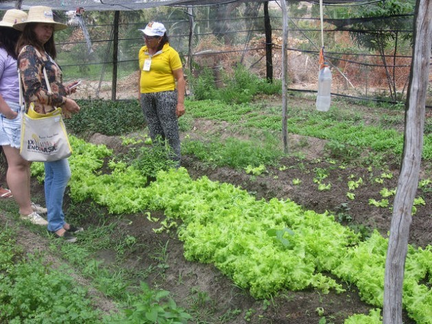 """""""This vegetable garden changed my life,"""" said Rita da Silva (right, in yellow), in the Primeiro do Maio village, where some 65 families live. A group of women organised to collectively grow vegetables and fruit to sell in the market in Caraúbas, a nearby city in Northeast Brazil. Credit: Mario Osava/IPS"""