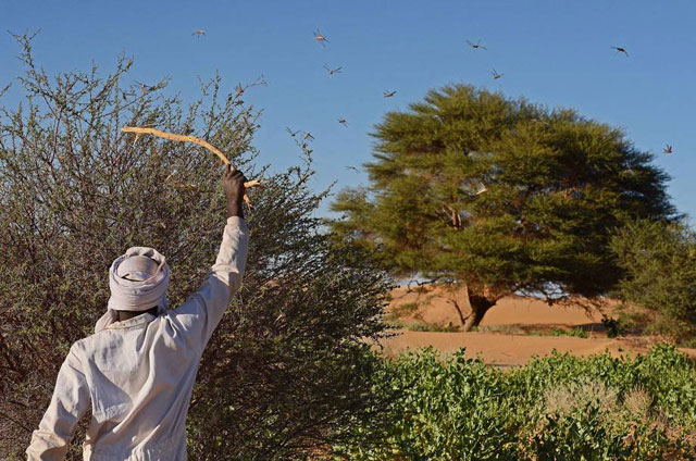 in dealing with insect-related challenges, it is clear that many African countries continue to take a reactive rather than a proactive approach and that needs to change