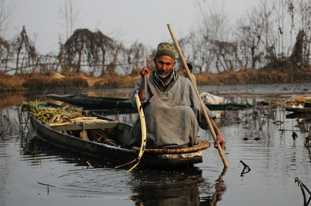 Fayaz Ahmad Khanday plucks a lotus stem from Wullar Lake in India's Kashmir. He says the fish population has fallen drastically in recent years. Credit: Umer Asif/IPS