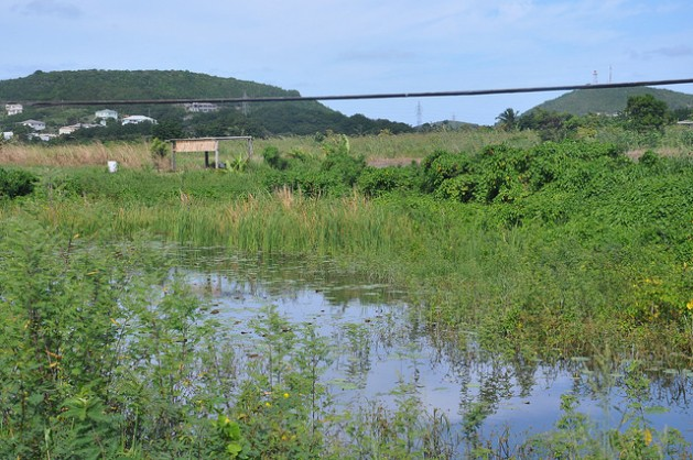 A manmade rainwater catchment on a farm in Antigua. Credit: Desmond Brown/IPS