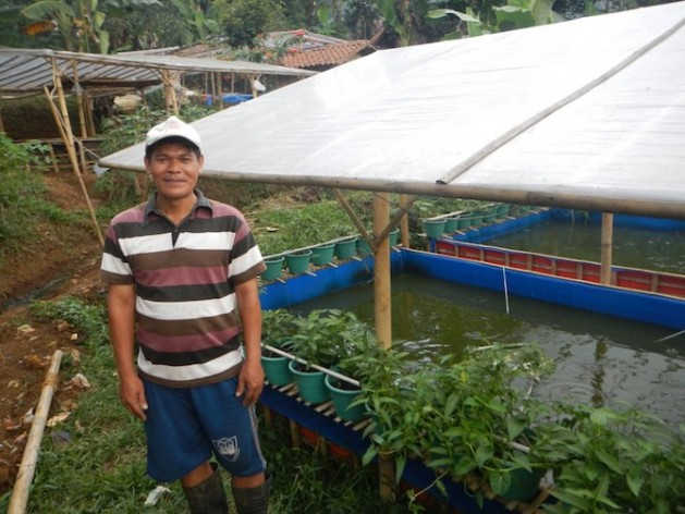 Aquaponics in Indonesia: Bumina and Yumina systems use an integrated farming technique combining vegetables, fruits and fish. Credit: FAO