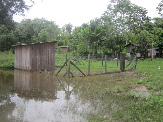 A chicken coop in the village of Miratu, flooded because the Xingu River rose much more than was announced by Norte Energía, the company that built and operates the Belo Monte hydroelectric plant, whose main reservoir is some 20 km upstream from the Juruna community in Brazil's northern Amazon jungle region. Credit: Mario Osava/IPS