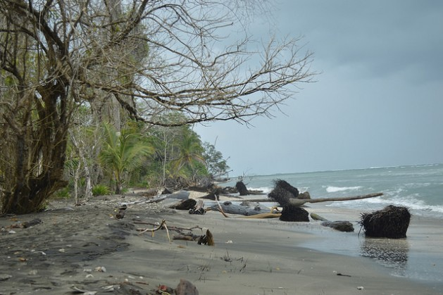 Cahuita National Park, on Costa Rica's eastern Caribbean coast, is suffering a process of coastal erosion which is shrinking its beaches, while the coral reefs underwater are also feeling the impact of climate change. Credit: Diego Arguedas/IPS