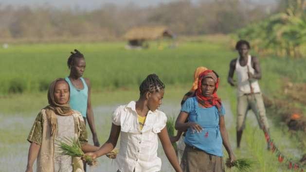 Women working on a rice farm in Ethiopia. Credit: WG Film